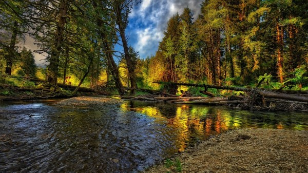 forest nature water trees landscape