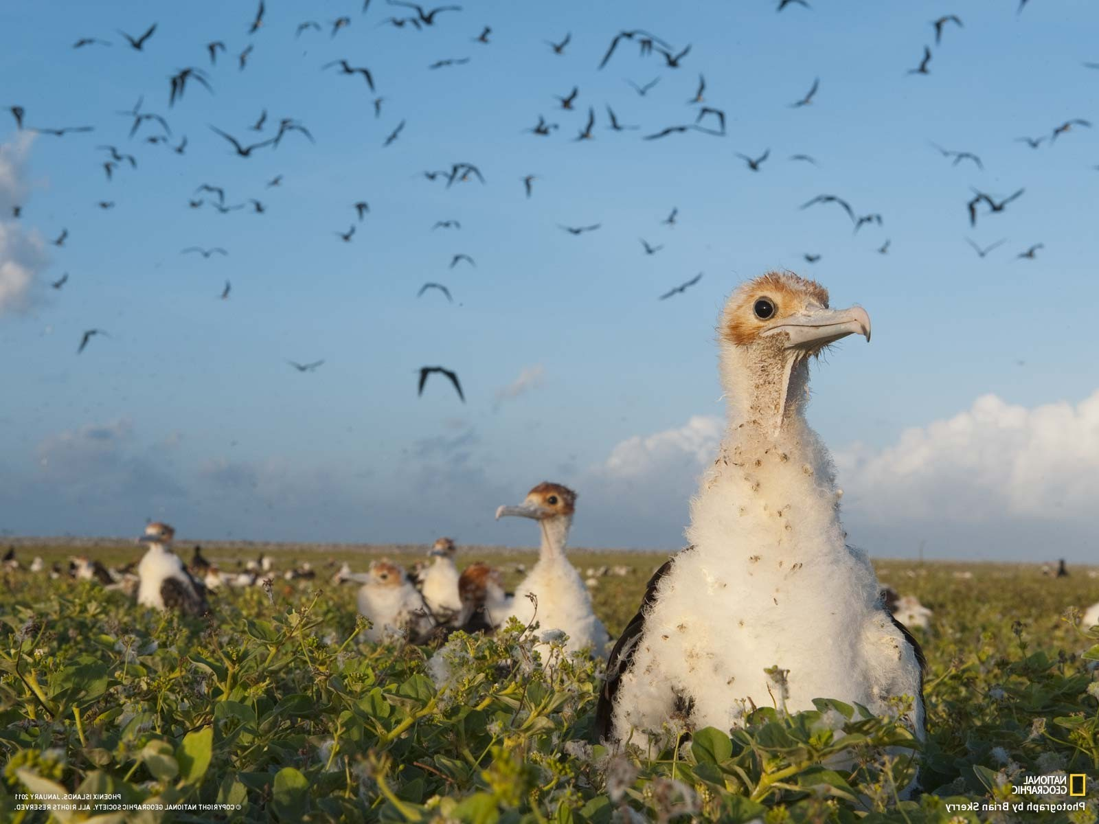 Discovery Channel Hd Wallpapers National Geographic Birds Wallpapers Hd Desktop And