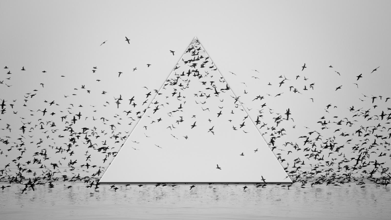 Artwork Birds Monochrome Flying Wedge Triangle Simple Water Reflection Minimalism Photo