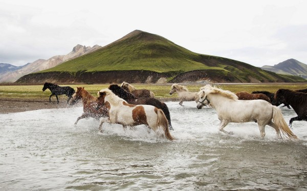 animals water landscape horse nature