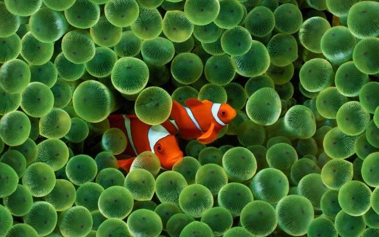 Apple Clownfish Wallpaper Iphone X Fish Sea Water Finding Nemo Animals Clownfish Sea