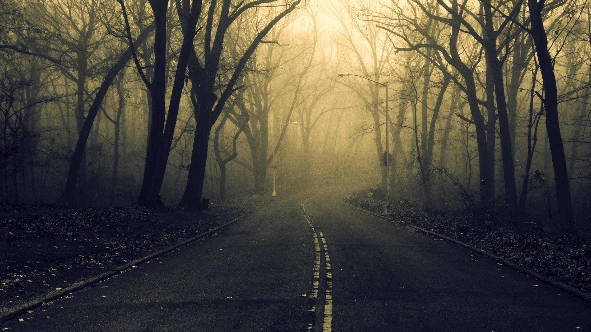 Fall Wooded Wallpaper Road Forest Spooky Wallpapers Hd Desktop And Mobile