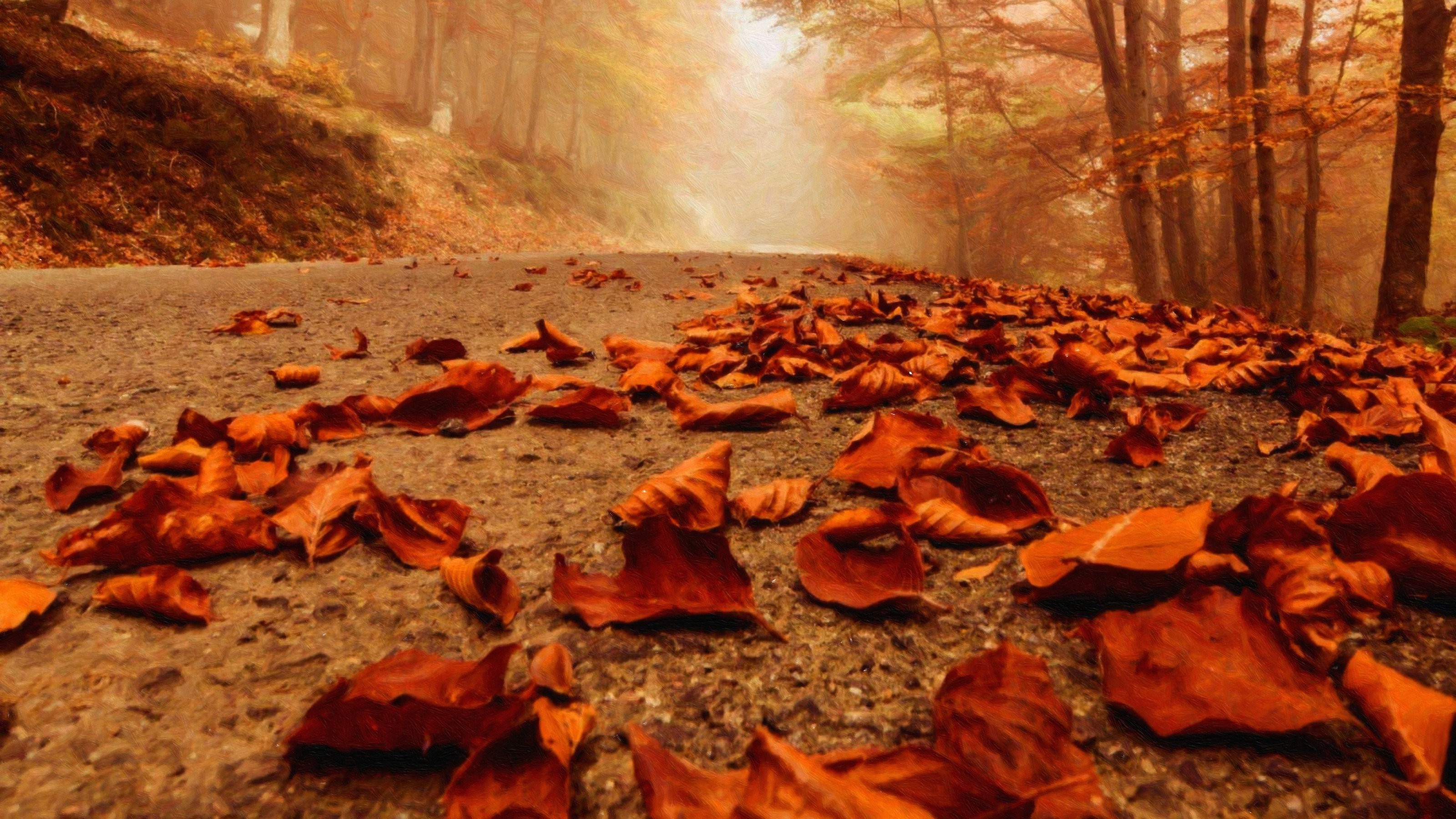 1920x1080 Fall Hd Wallpaper Fall Leaves Path Forest Wallpapers Hd Desktop And