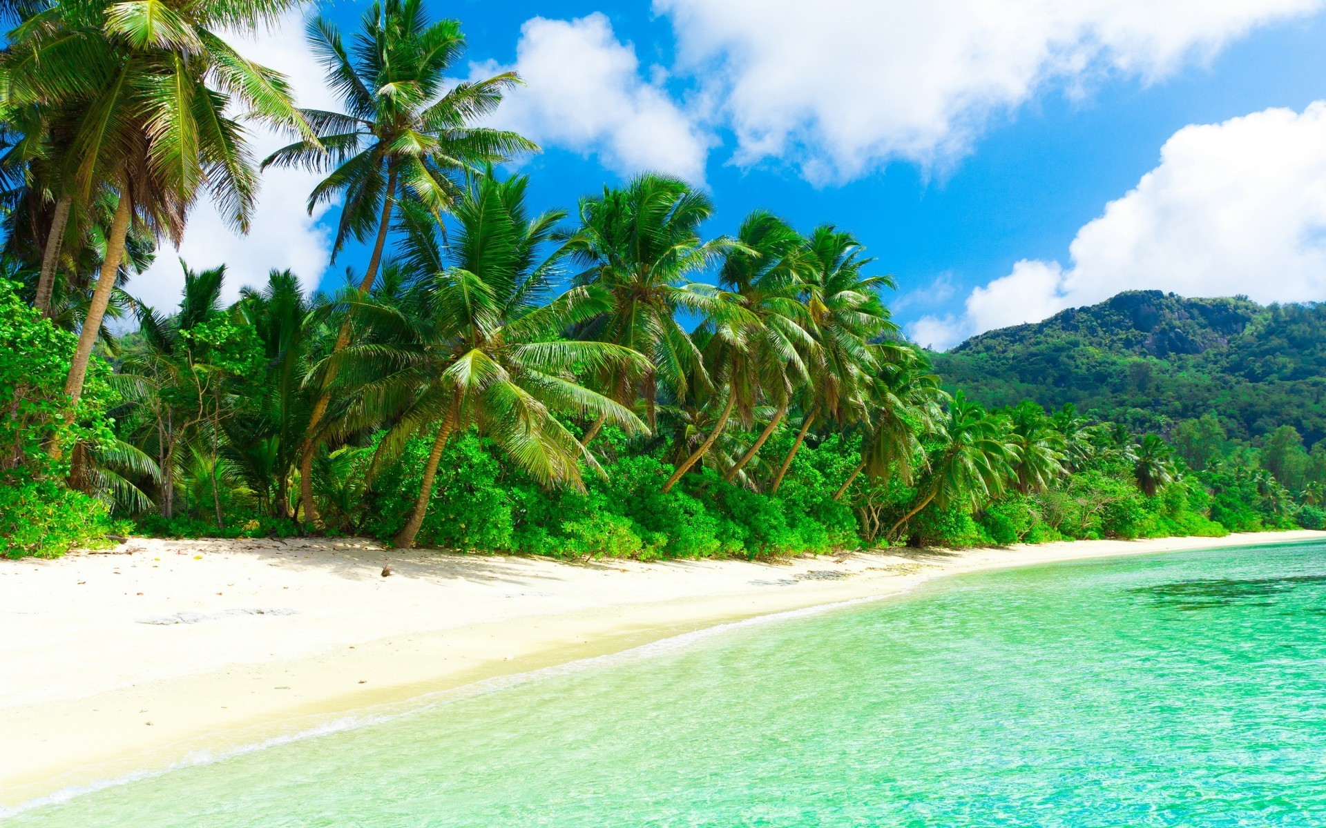 Sahil 3d Wallpaper Beach Sand Palm Trees Wallpapers Hd Desktop And Mobile