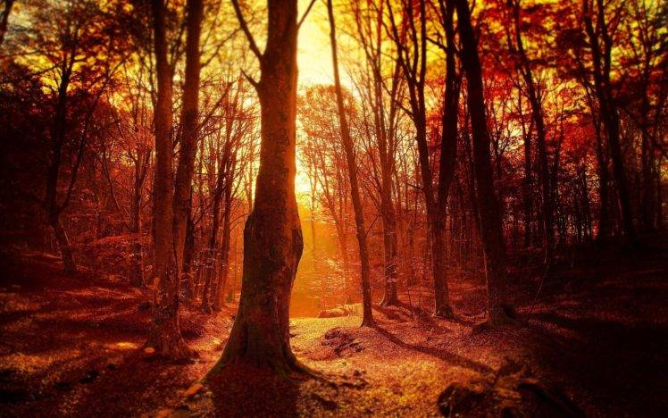 Fall Wallpaper Hd For Galaxy S4 Fall Sunset Forest Trees Wallpapers Hd Desktop And