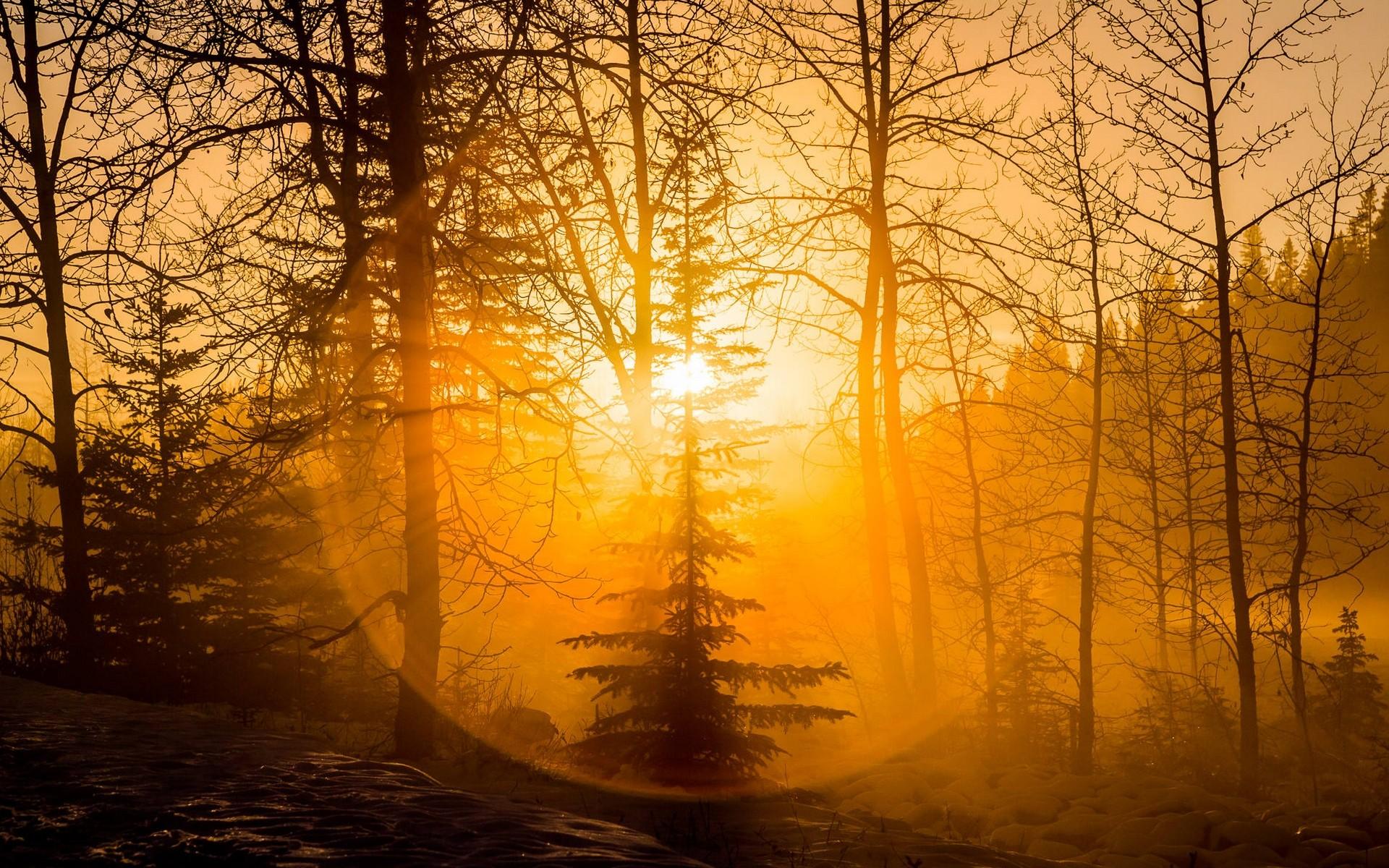 3 Creen Wallpaper Fall Photography Nature Landscape Forest Sunset Mist