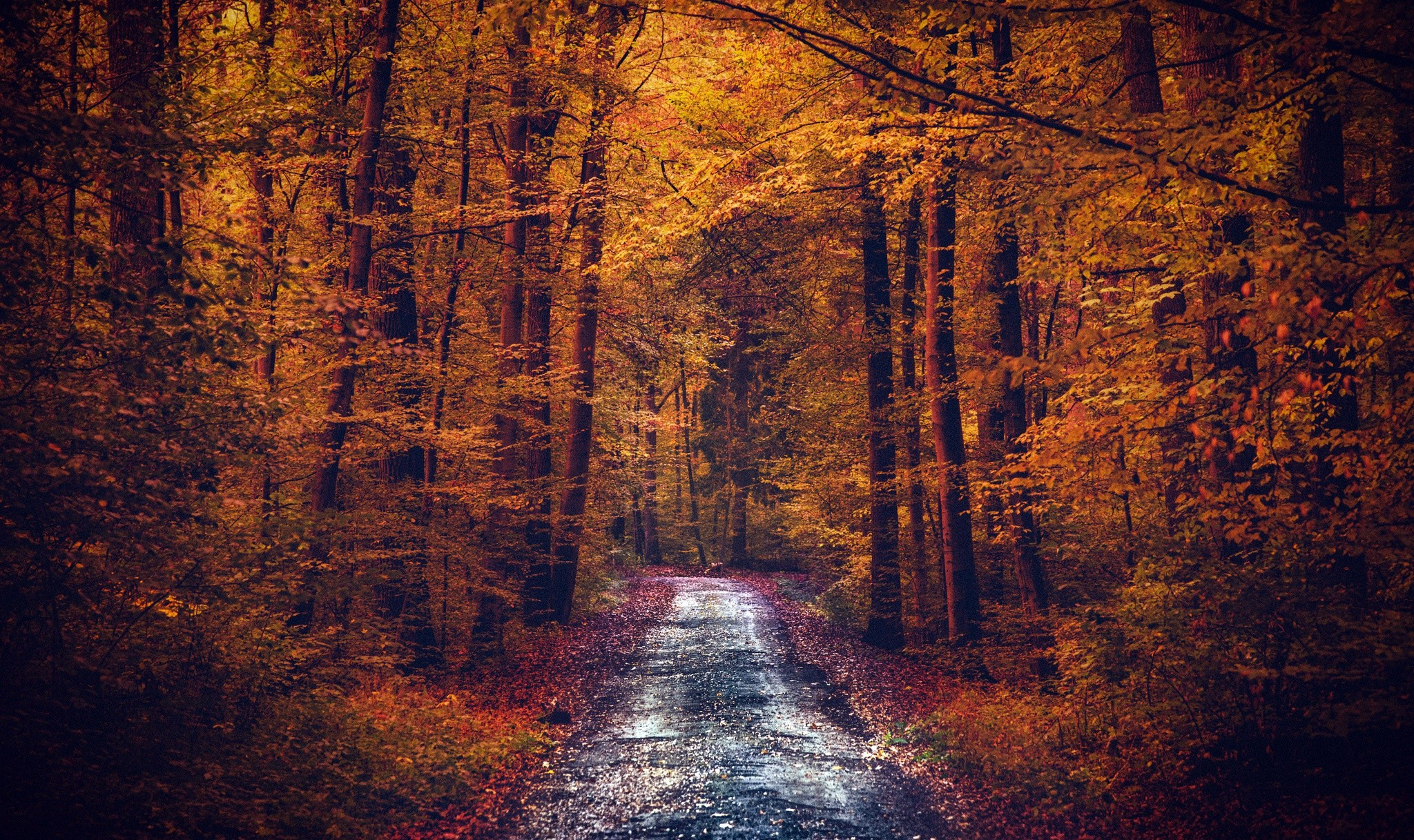 Fall Computer Screen Wallpaper Pathway Forest Fall Nature Wallpapers Hd Desktop And