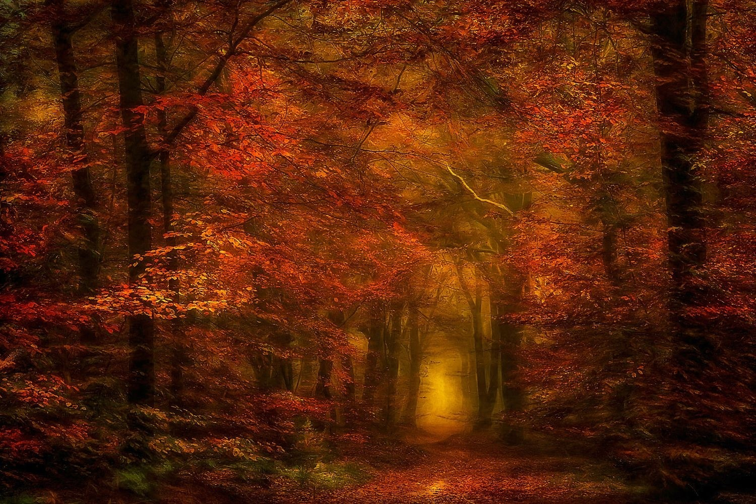 Fall Woodsy Pc Wallpaper Nature Photography Landscape Forest Fall Path Mist