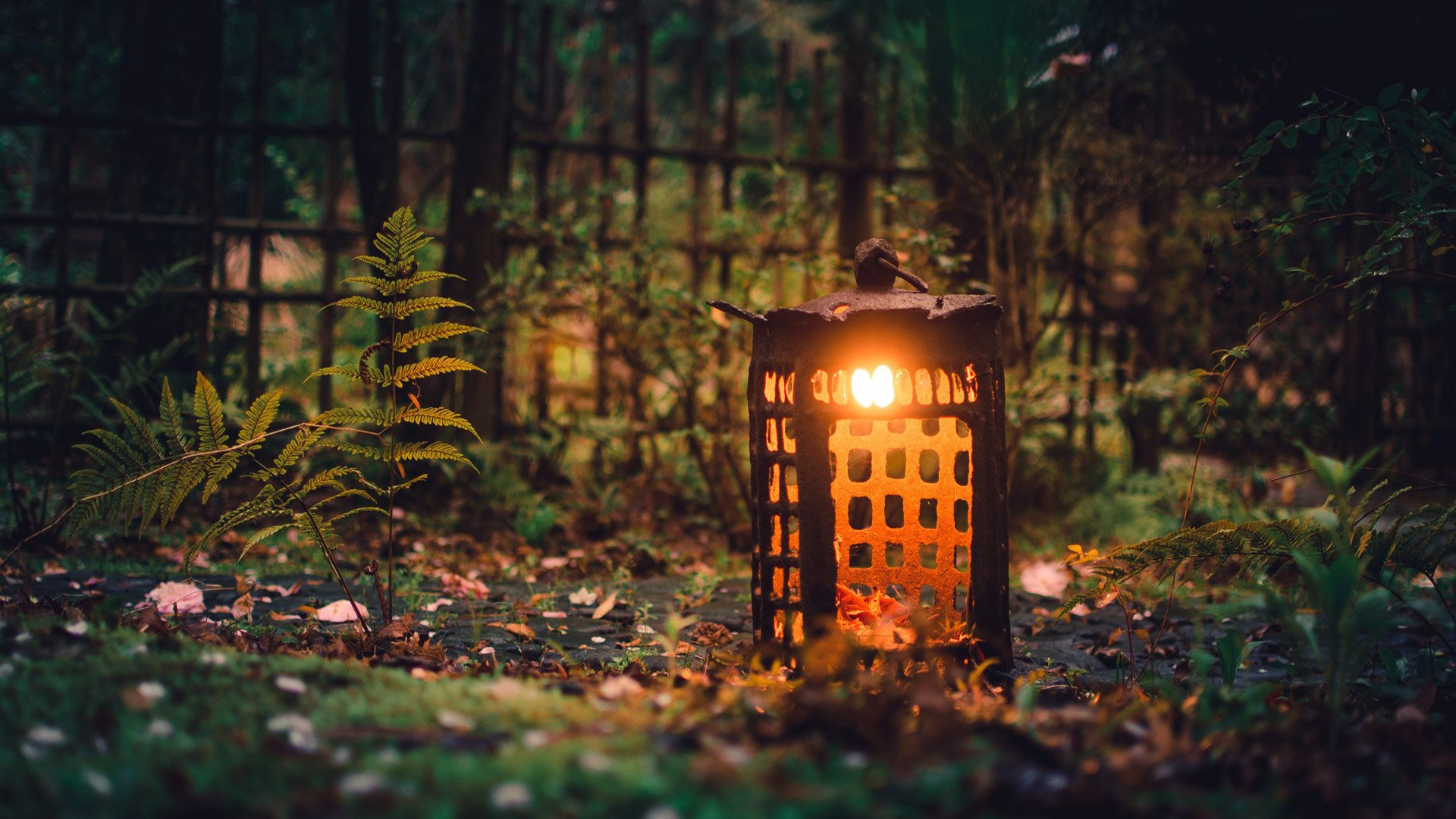 Free Wallpaper Fall Leaves 1600x900 Nature Natural Light Lantern Outdoors Leaves