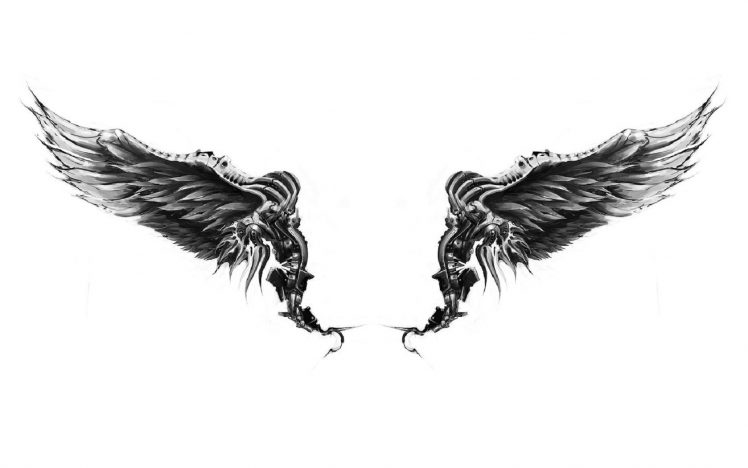 wings white background wallpapers