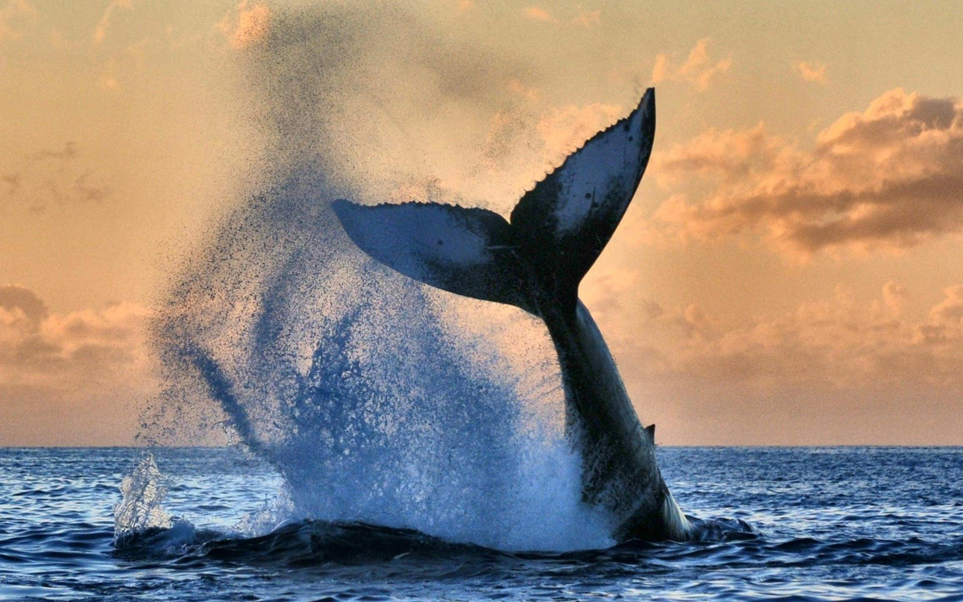 Animal Wallpaper Full Hd Animals Sky Sea Nature Whale Wallpapers Hd Desktop