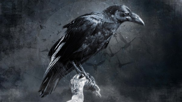 Crow Digital Art Wallpapers Hd Desktop And Mobile