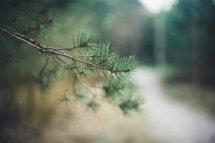 Nature Depth Of Field Macro Leaves Blurred Wallpapers