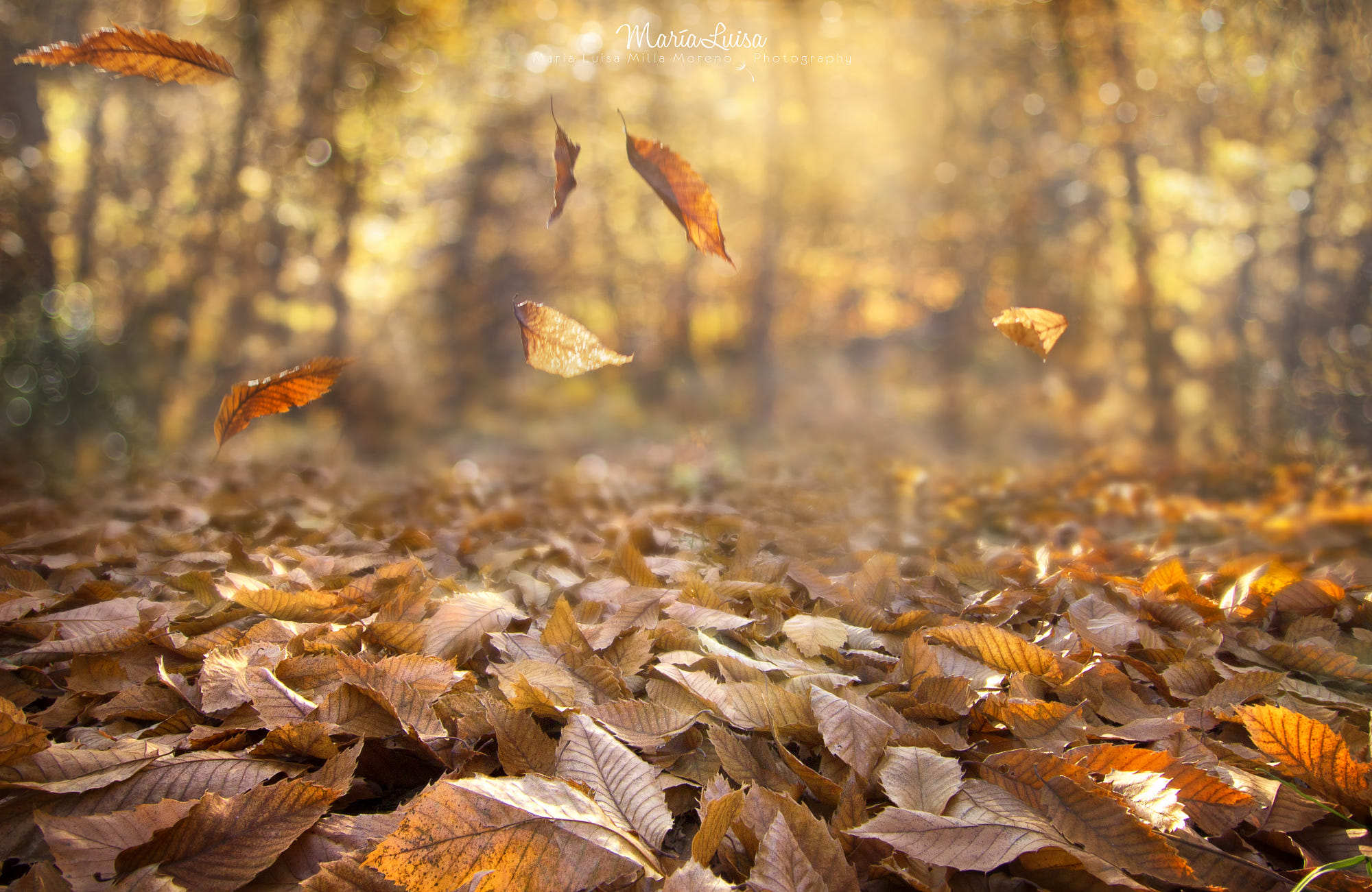 Fall Landscape Wallpaper Desktop Fall Nature Leaves Depth Of Field Wind Forest