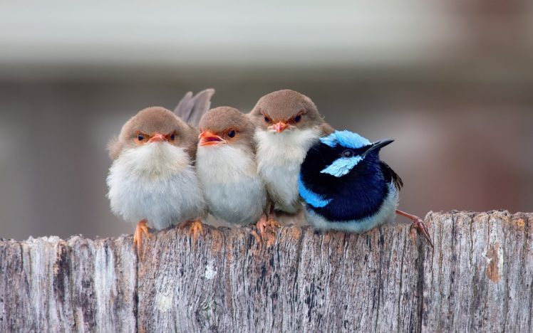 birds cute group animal