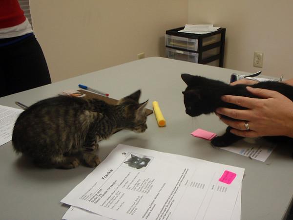 kitten introductions