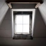 Are There Pests Causing Damage In Your Loft?
