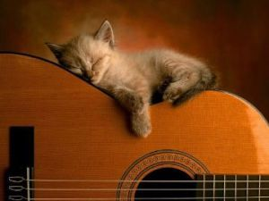 cat-dreams