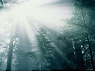 sun-shining-into-forest
