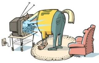 burro capim tv