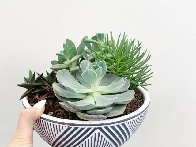 Better Homes & Gardens Succulent Garden with Pot