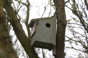 002 Bird Box No 7 with hole made by Woodpecker_edited-2 (1)