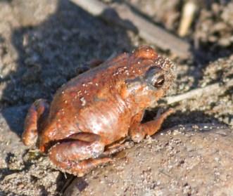 003 Froglet_edited-2