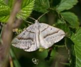 003 Lead Belle Moth_edited-2