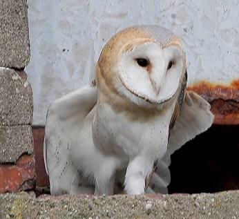 IMG_7354BABY OWL DEC 2013 TO PRINT