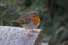 011 Robin on seat_edited-2