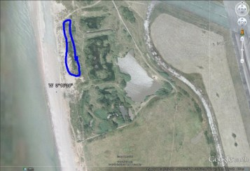 Dune Restoration Tree cutting area