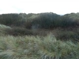 P1010523 Tree cutting Dune Restoration