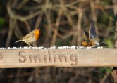 009 Two Robins_edited-2