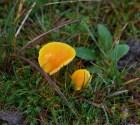 008 Fungi_edited-2