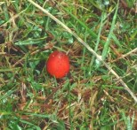 P1010717 Red Fungii_edited-1
