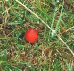 P1010717 Red Fungii_edited-1
