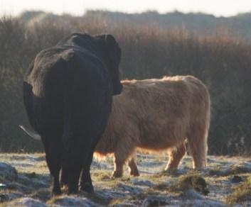 img_3464-new-bull