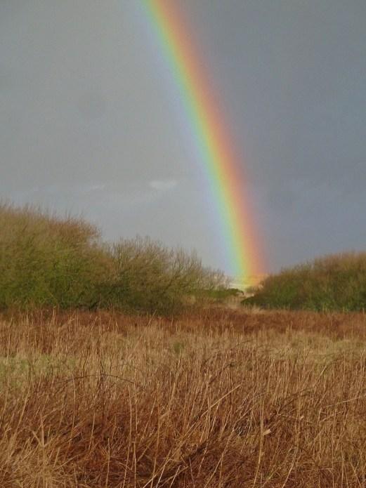 P1020121 Rainbows end - Copy