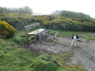 P1020175 Table pushed over by cows - Copy