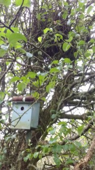 Box No 5 Shows Magpie nest just above box - Copy