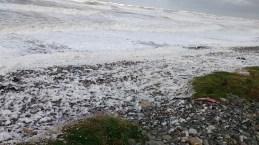 Sea foam Earnsy Bay 3 - Copy