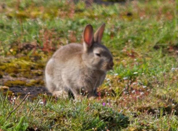 IMG_6254 Rabbit in the sun - Copy
