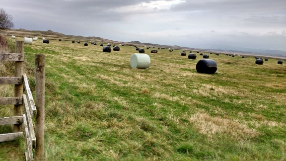 IMG_20181109_081252822_HDR - Cut bales in first field Copy