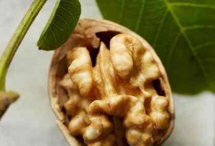 walnut halve