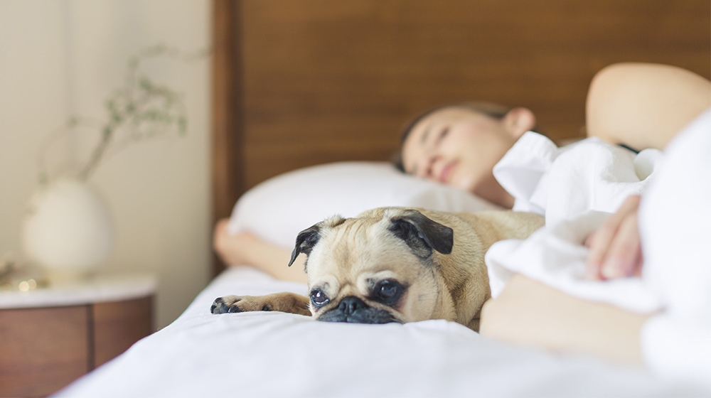 Dog Healthy Sleep