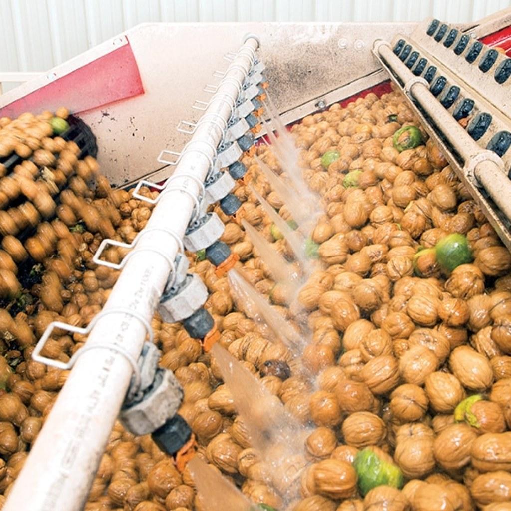process walnuts