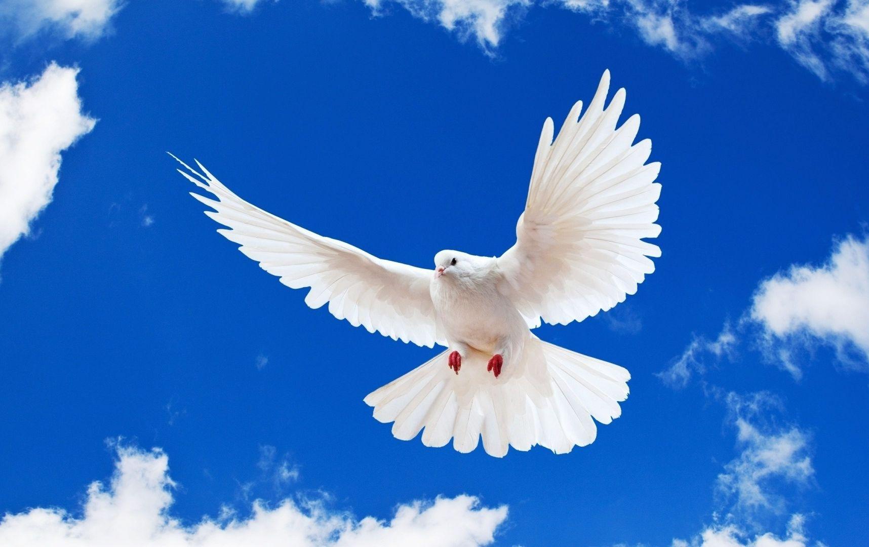 Imagen gratuita de Paloma en cielo azul en HD