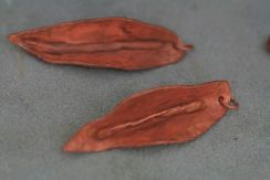 Noelle has shaped her copper leaves, drilled holes and soldered a copper link in place.