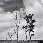 Landscape 24 by walter huber