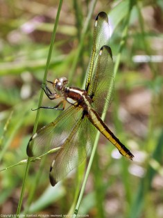 Photo 6. Female.